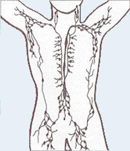 Lymph